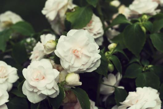 Spring Sweetness