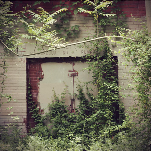 Inspiration Photo Friday: Overgrowth - Copyright 2012 Melissa O'Connor