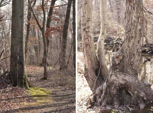 Historic Series: The Meroke Preserve - Copyright 2012 Melissa O'Connor