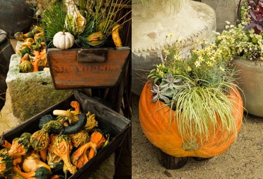 Fall Harvest Flavor at Terrain