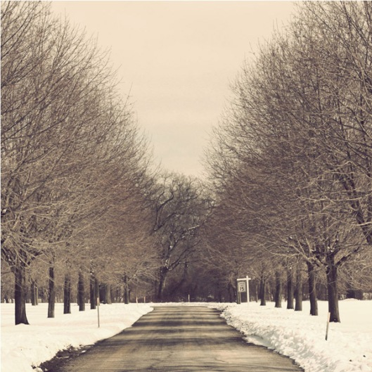 Inspiration Photo Friday: Winter Wonderland - © Melissa O'Connor-Arena