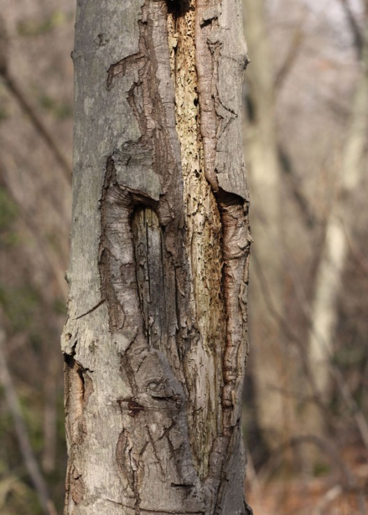 Inspiration Photo Friday:Scarred Tree - © Melissa O'Connor-Arena