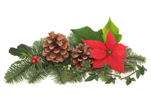 guest post christmas flower decorations
