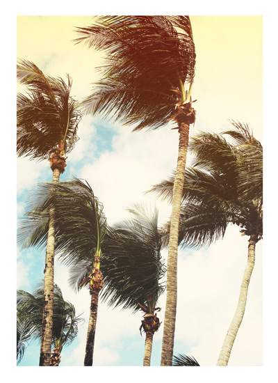Dancing Palms - Photo by Melissa O'Connor-Arena