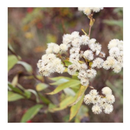 Fuzzy Wildflowers